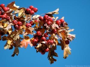 12:6:14 berries sig