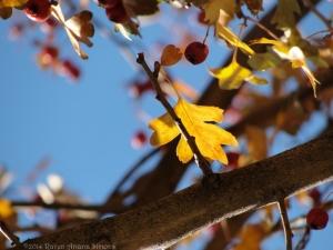 12:6:14 branch leaf a sig