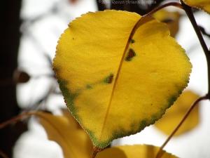 12:9:14 leaf cl sig