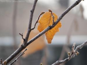 1:11:14 little leaf sig
