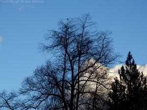 1:27:15 robin tree sig