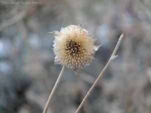 1:5:14 sunflower sig