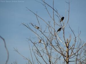 1:6:15 birds sig
