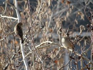 1:6:15 sparrows sig
