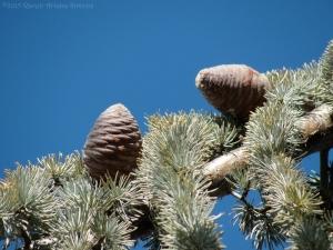 1:7:15 two cones sig