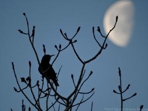 2:10:15 moon s sig