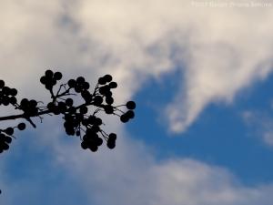 2:15:15 berries:clouds sig