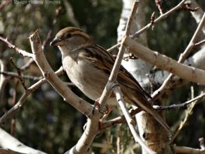 2:16:15 f sparrow sig