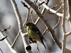 2:16:15 goldfinch sig