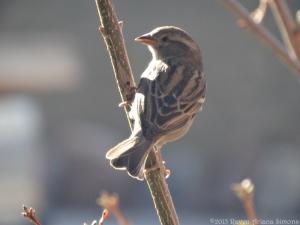 2:24:15 f sparrow sig