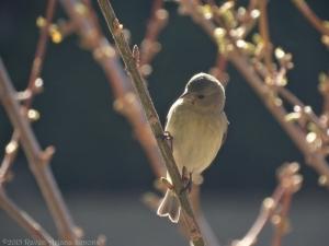 2:24:15 goldfinch 2 sig