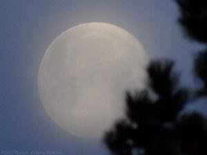 2:5:15 moon sig