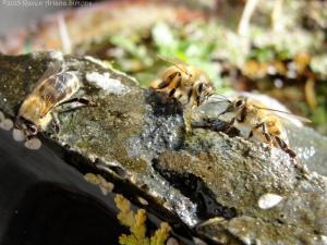2:5:15 three bees sig