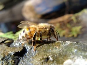 2:8:15 side bee pretty sig