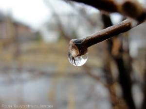 Rain on hazel twig on 2/27/14.