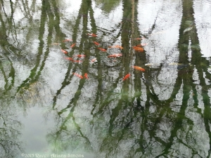3:15:15 koi and reflections sig