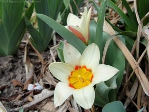 3:16:15 tulips sig