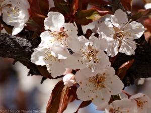 3:17:15 blossoms sig