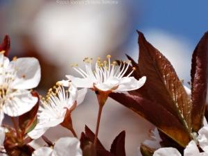 3:17:15 side blossom sig