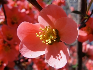3:19:15 blossom shadow sig