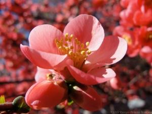 3:19:15 side blossom sig