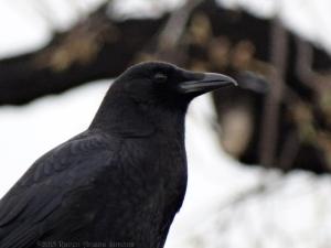 3:23:15 crow sig