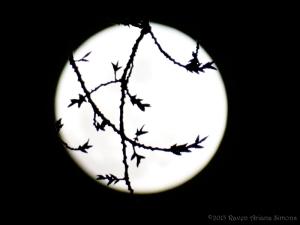 3:4:15 moon sig