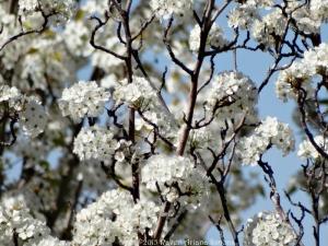 3:26:15 twisty branch blossoms sig