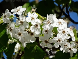 3:29:15 blossoms close sig