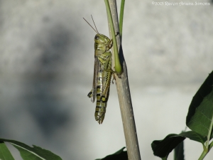 10:1:15 grasshopper sig