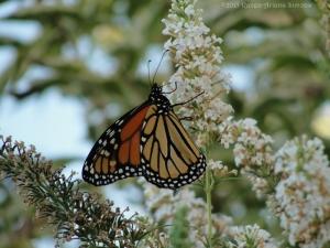 10:1:15 monarch sig