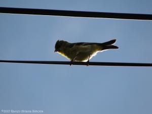 10:2:15 goldfinch sig