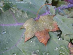 10:2:15 leaf:kale 3 sig